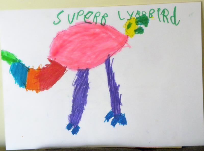 'Superb Lyrebid' - texta drawing by Thomas Sell