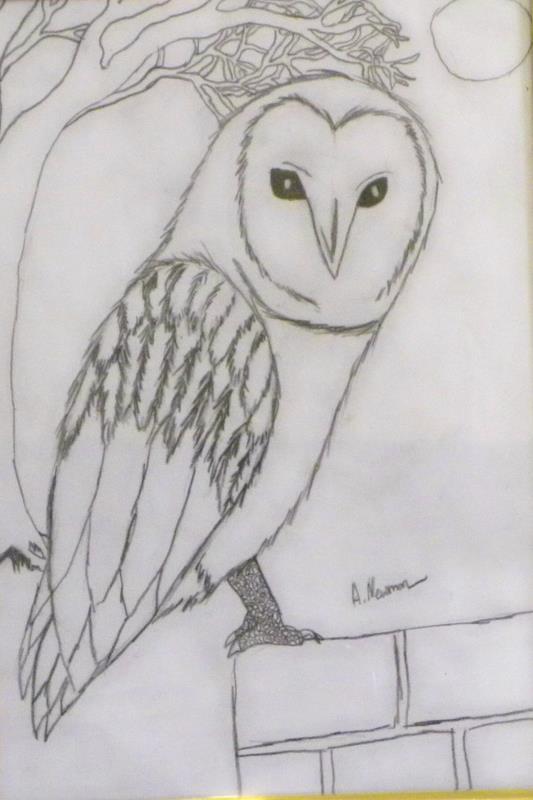 Alexandra Newman's drawing of an owl