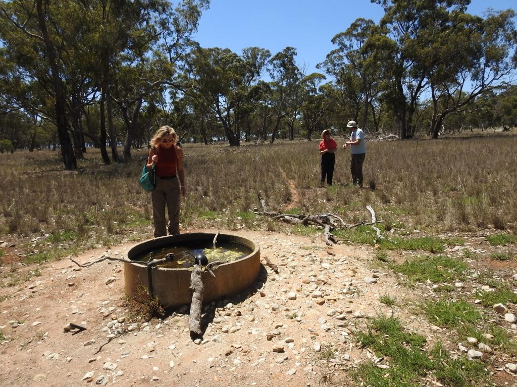 Water trough in Pinkerton forest- wildlife magnet