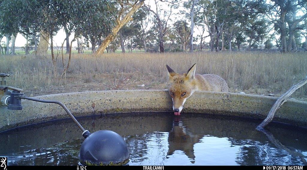 Fox Pinkerton